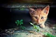 За что ставят памятники кошкам и собакам?